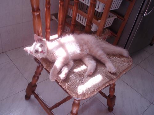 Coccola sulla sedia