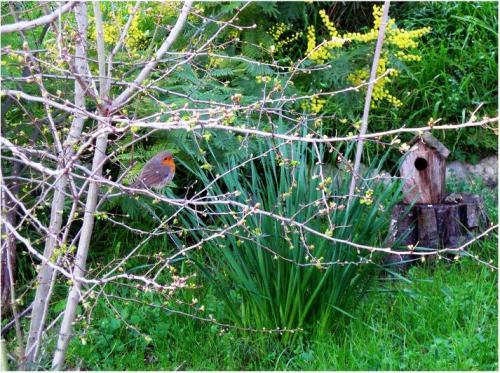 Robin e il bosco