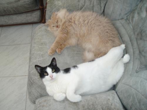 Cristina e Coccola in poltrona