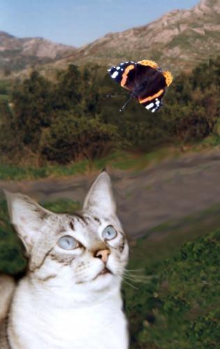 Lulù con la farfalla