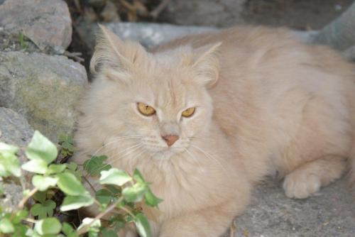 La gattina Coccola nell