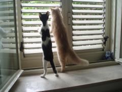 Curiosità gattesca 2