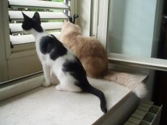 Curiosità gattesca