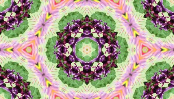 Violette 1  tre jpeg