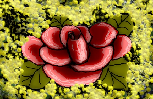 Mimose e rosa rossa 4