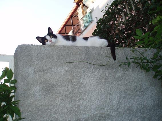 Cristina sul muretto